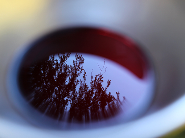 肉にはワイン