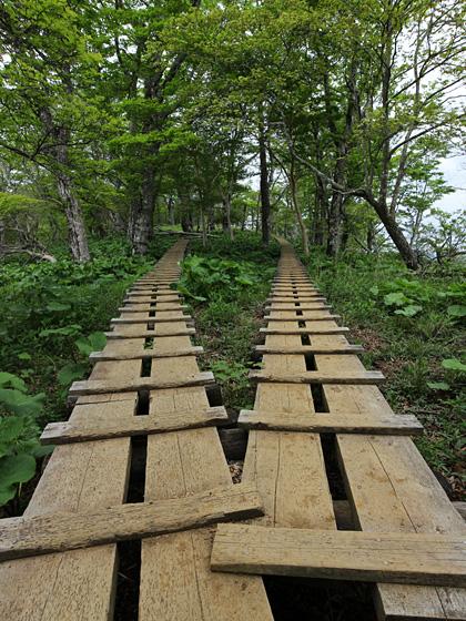 頂上手前の木道